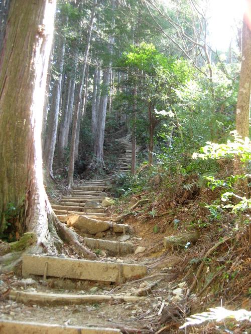 馬越峠道(天狗倉山01)11
