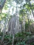 馬越峠道(天狗倉山01)16