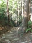 馬越峠道(天狗倉山02)16
