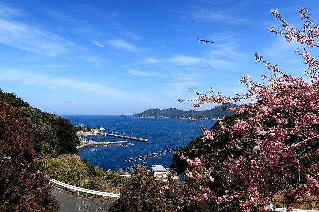 四浦半島春真っ盛り 1