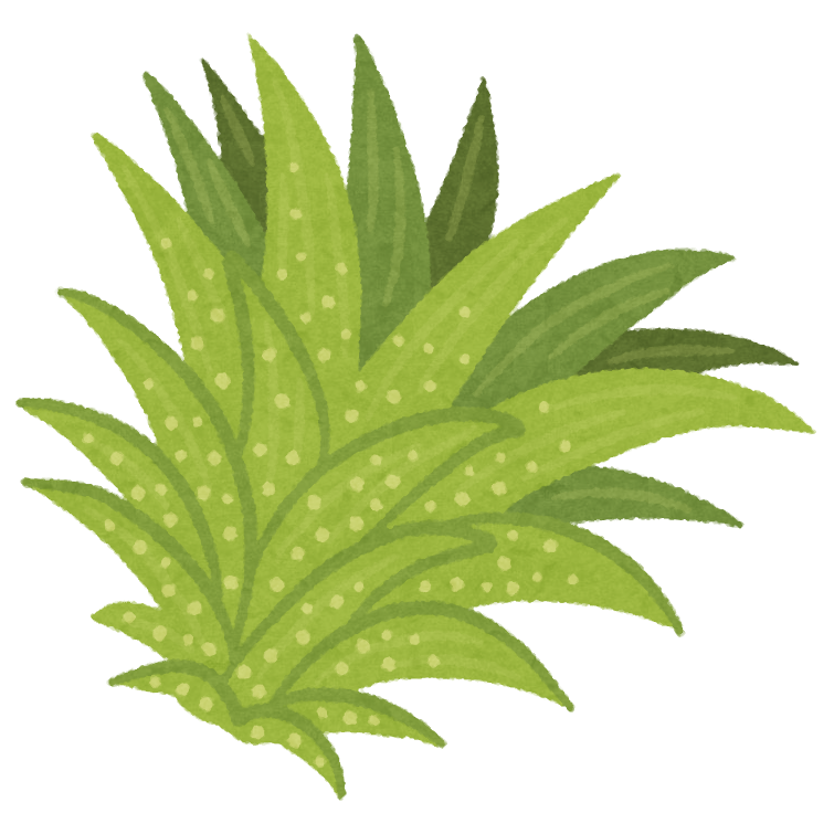 plant_airplants.png