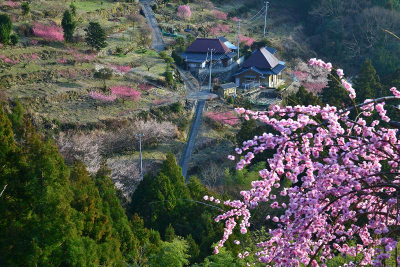 梅薫る山郷