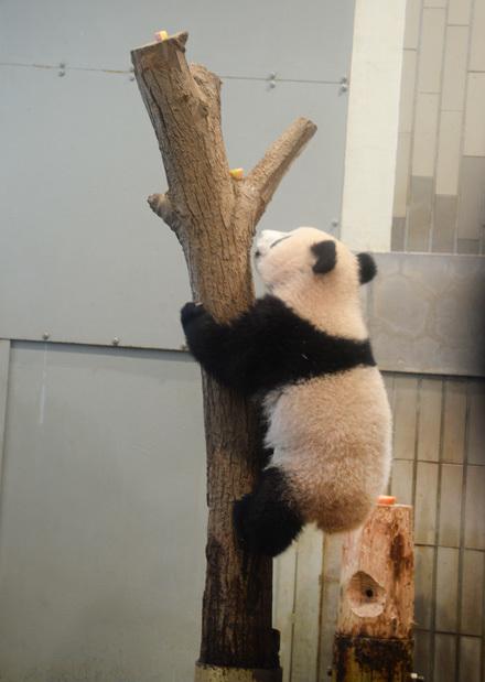 XiangXiang2_031218
