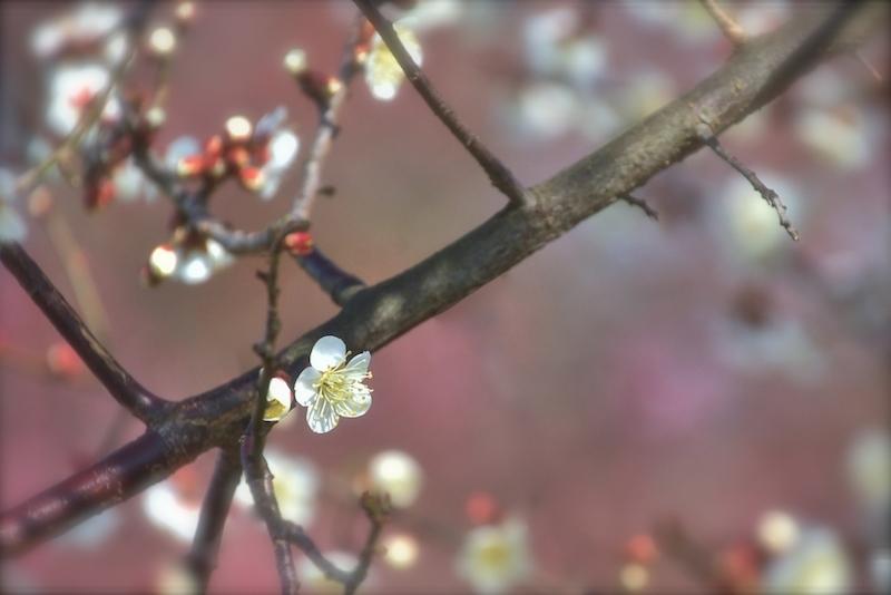 ほのかに…春の香