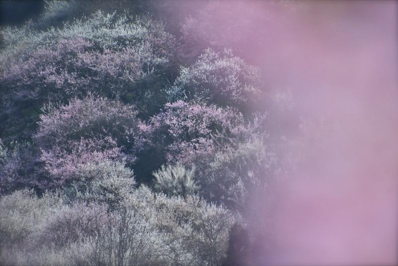 春告草を愛でに…Ⅱ