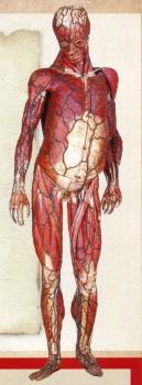 人体img214 (2)
