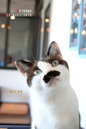 モカ20180228