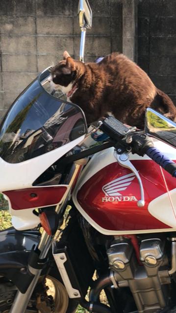 猫のチョコ、大型バイクに挑戦!なのよ。
