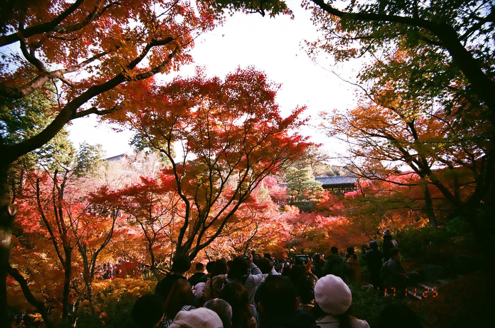京都に紅葉を、いや人ごみを見に行った時の