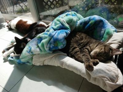 幸せロメン&ポコ&コアラ