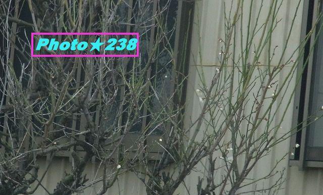 0219梅の花