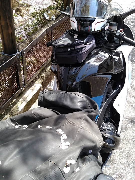 41バイク桜