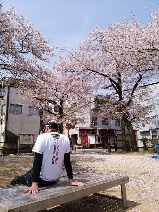 41公園桜