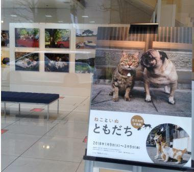 岩合さんの写真展