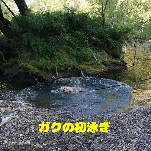 gaku (86-6)