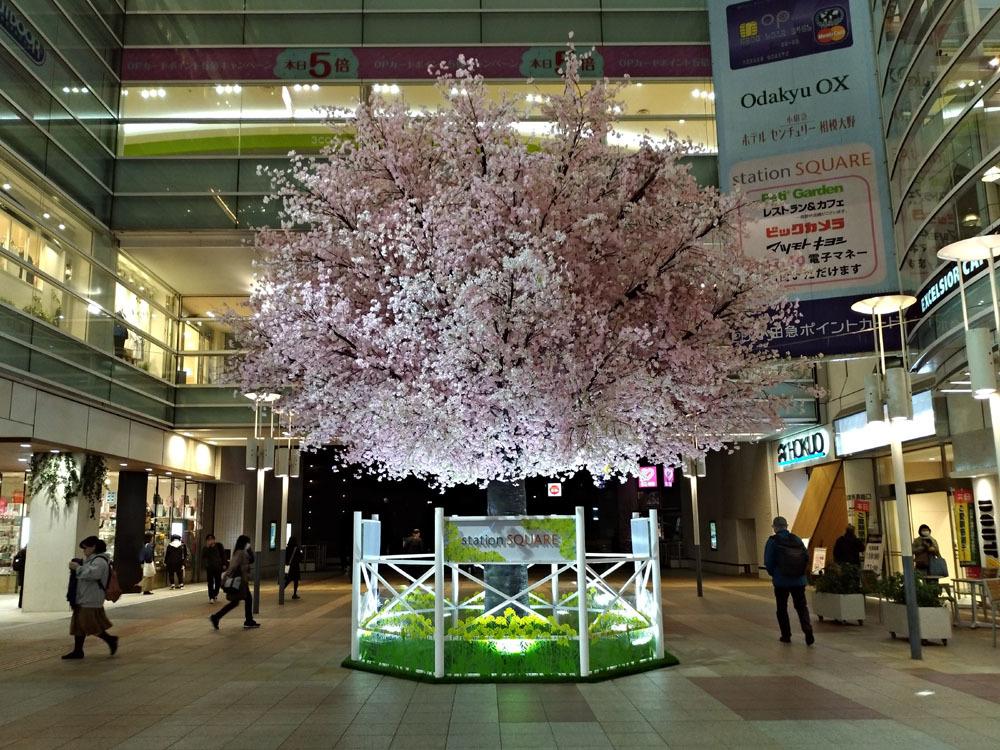 180323_相模大野桜2