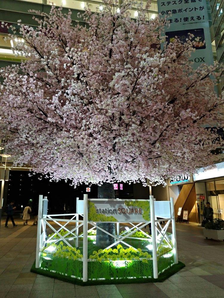180323_相模大野桜1