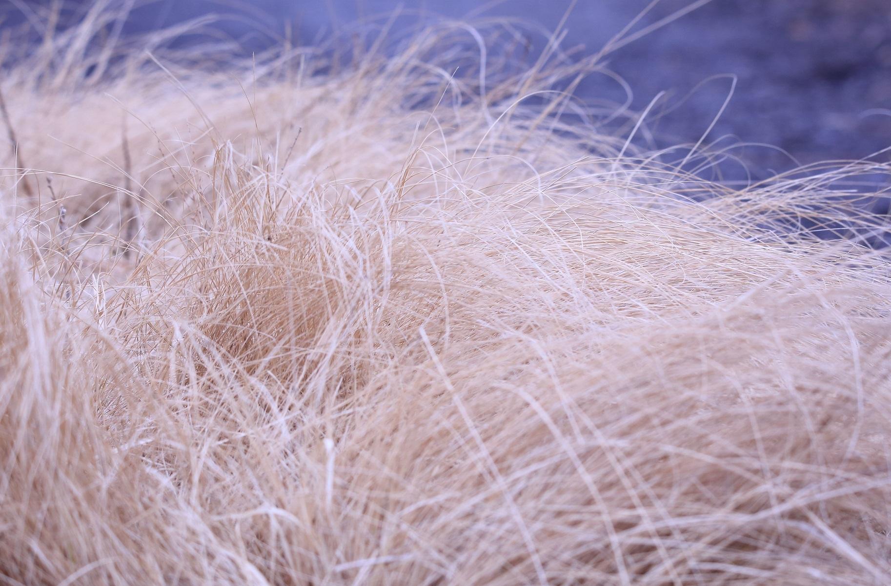ブログ 箒川の土手 白髪のオジサンの頭.jpg