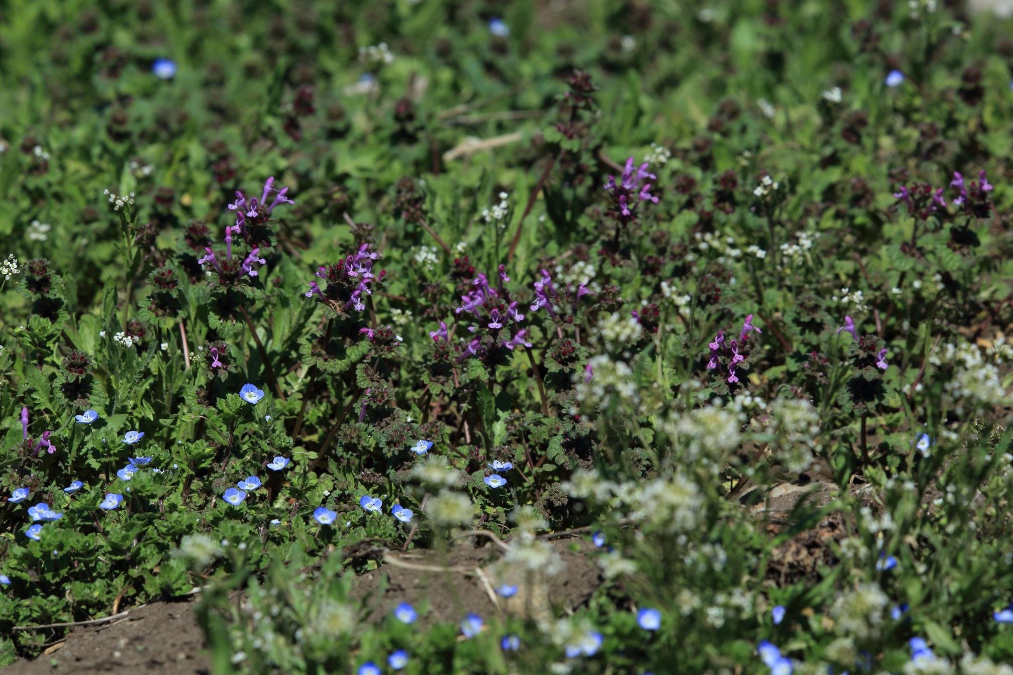 ブログ 野の花3種盛.jpg