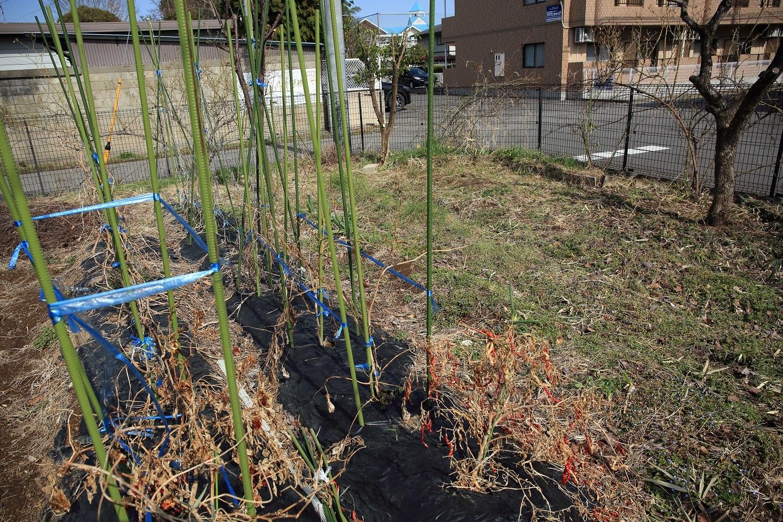 ブログ 昨年の夏以来放置された菜園.jpg