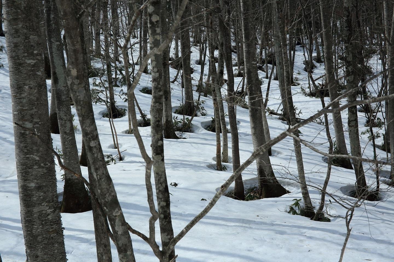 ブログ 2018 3 29 斜面には残雪が.jpg