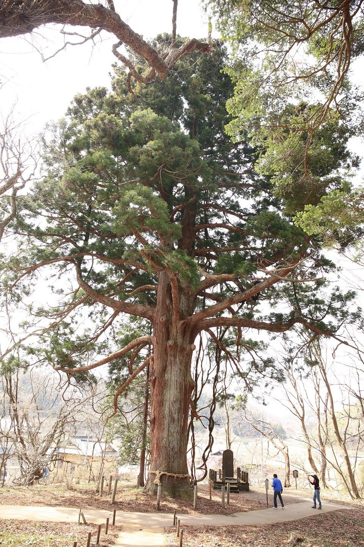 ブログ 巨木 これはカップルではありませんよ 男2人.jpg
