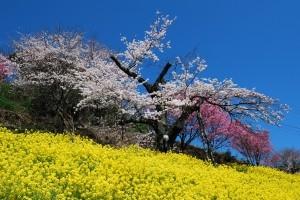 まさに陽春