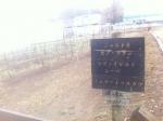 150309 (48)シャトーカミヤのブドウ畑