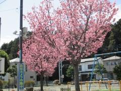 20180323-11:57境川遊水池公園
