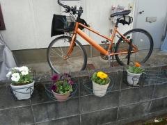 2018/3/7購入した花