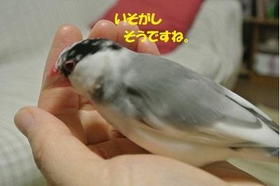 DSC_8426済