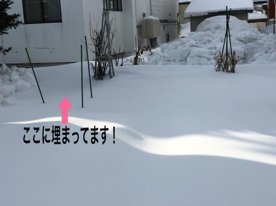 雪の下大根2018①