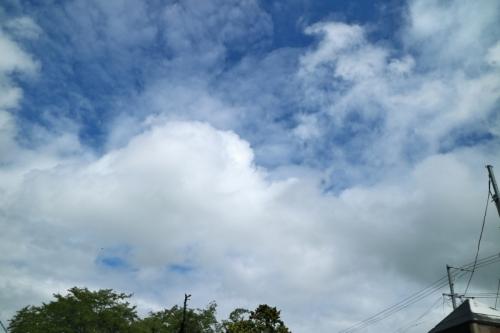IMG_0691 青空を見上げ