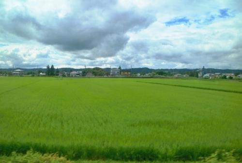 IMG_0703 青い田