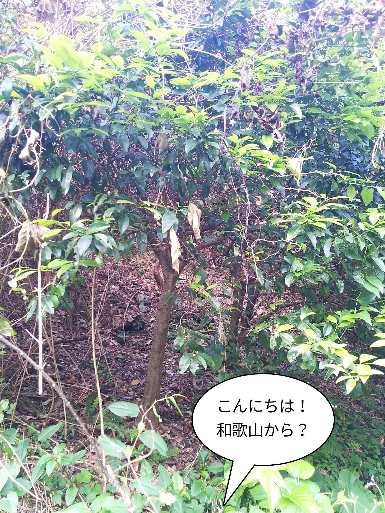 こんにちは!和歌山から?