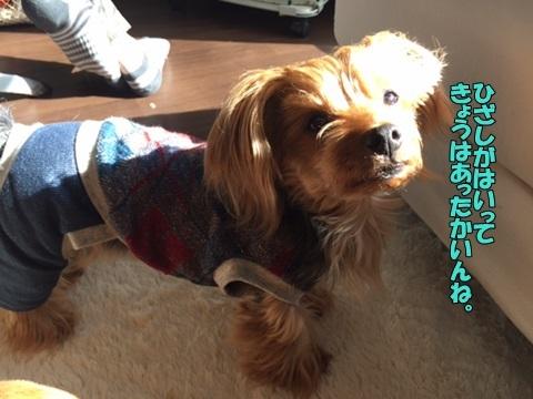 image118031001.jpg