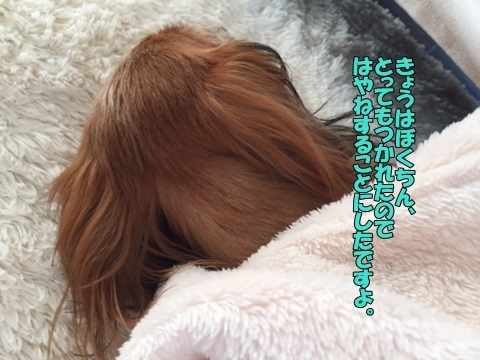 image318032801.jpg