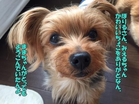 image918032601.jpg