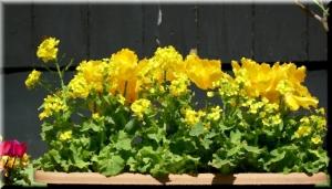 黄色い花、油絵風