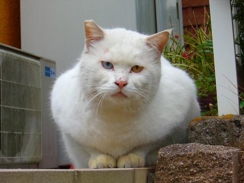 通りすがりに見かけた猫(773)b