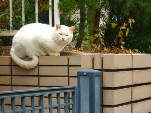 通りすがりに見かけた猫(773)a