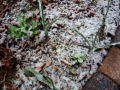 ナンフェア 春の雪