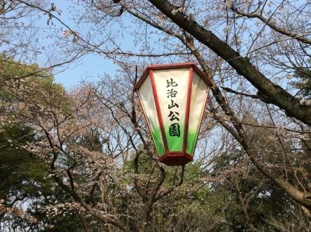 ぼんぼりを見ながら飲む日本酒はうまい