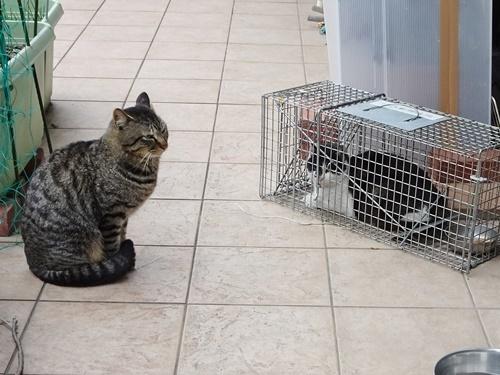 ゴルゴ&ネネコ