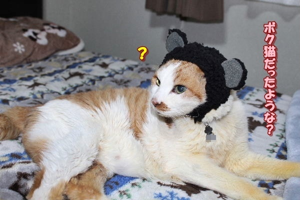 猫だったよね