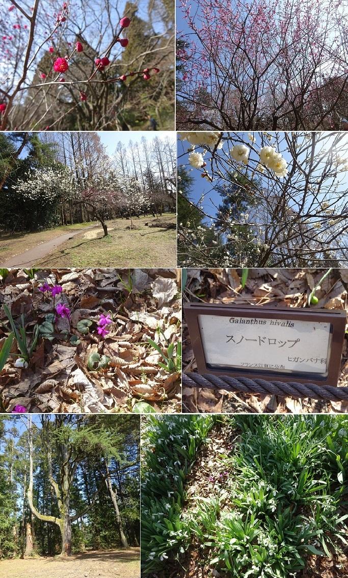京都植物園9_