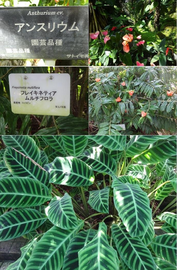 京都植物園4