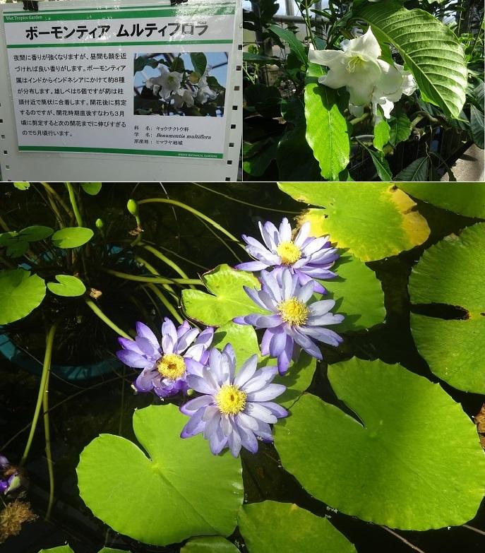 京都植物園3