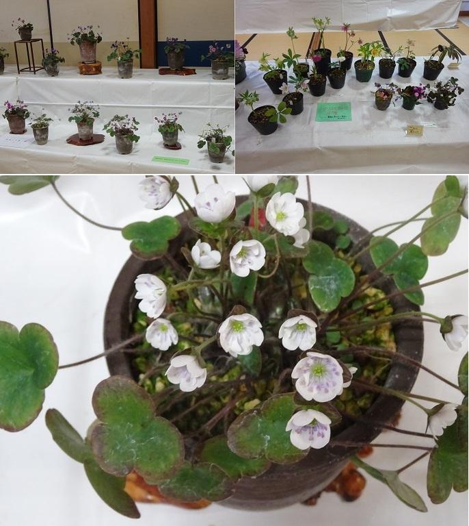 緑化クラブの展示品