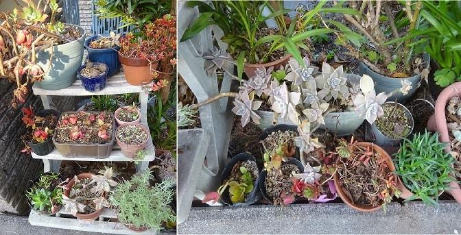 枯らした植物